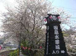 Sakura092