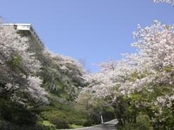 Sakura093